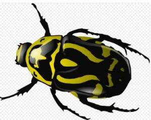 Käfer gelb