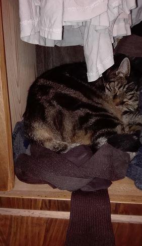 """Wenn sich der Kleiderschrank nicht mehr schließen läßt wegen Unordnung, legt sich sogar eine Katze in das neu entdeckte """"Nest"""" hinein... Und sollte man sie nicht sehen und den Schrank verschließen und außer Haus gehen, gibt es möglicherweise ein Tier-Drama..."""